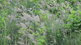 Tall grass and weeds stock footage