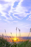 Tall grass on the wild atlantic way sunset Royalty Free Stock Photo