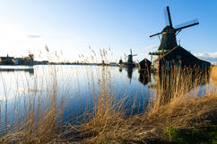 Tall grass and Windmills by a lake in Spring Royalty Free Stock Photos