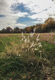 Tall grasses Royalty Free Stock Images
