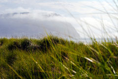 Tall green grass on sand dunes coastal ocean Royalty Free Stock Photo