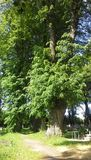 Tall green tree in cemetery Stock Image