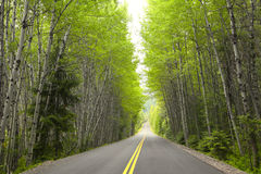 Tall green trees Royalty Free Stock Images
