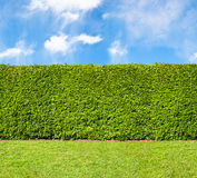 Tall Hedge Endless Seamless Pattern Stock Photos