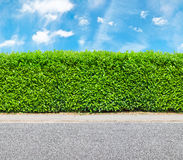 Tall hedge with the part of the gravel road Royalty Free Stock Photos