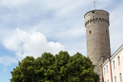 Tall Hermann Tower in Tallinn Stock Photos