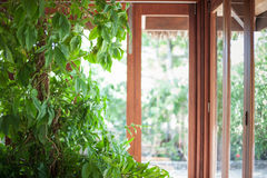 Tall house plant in front of a line of windows. Tall beautiful house plant growing in front of a line of windows with a lot of light Stock Photos