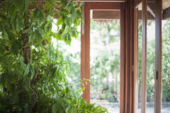 Tall house plant in front of a line of windows. Tall beautiful house plant growing in front of a line of windows with a lot of light Royalty Free Stock Image