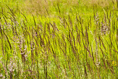 A tall juicy grass on a boggy meadow Stock Images