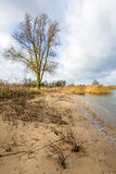 Tall leafless tree on the banks of a Dutch river stock photo