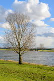 Tall leafless tree on the banks of a wide river. Tall leafless tree on the banks of a wide Dutch river. It's a sunny day with white clouds in the blue sky in the Royalty Free Stock Photo