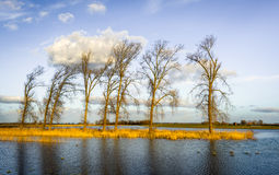 Tall leafless trees in a flooded area stock photo