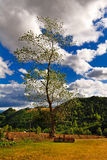 Tall leafy tree and clouds. Tall leafy tree and green hills with a cloudy blue sky royalty free stock image