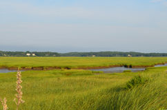 Tall Marsh Grass at Powder Point in Duxbury. Summer with tall marsh on Duxbury Beach in Massachusetts Royalty Free Stock Image
