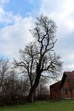 Tall mighty tree without leaves rising above red brick family house with bird sitting on branch overlooking surroundings. On cloudy gloomy day stock photo