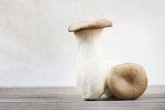 Tall mushrooms Stock Photo