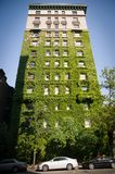 Tall NYC building covered with ivy. Tall NYC building covered with green ivy Royalty Free Stock Images