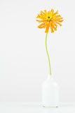 Tall orange flower in small vase. Royalty Free Stock Photography