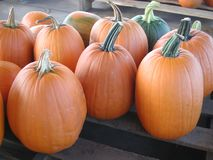 Tall orange pumpkins on a wooden pallet royalty free stock photos