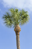 Tall Palm and Cloudy Blue Sky Royalty Free Stock Photography