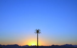 A tall palm tree at sunset with mountains at the background Stock Photography