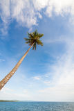 Tall palm tree against sky Royalty Free Stock Photography