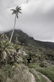 Tall palm tree over rainforest track Lord Howe Island Royalty Free Stock Image