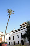 Tall Palm tree in a Spanish town square Royalty Free Stock Photo