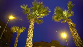 Tall palm trees against night sky background, stormy weather at exotic resort. Stock footage stock video