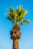 Tall palm trees against the sky royalty free stock images