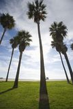 Tall Palm Trees at Beach Stock Photos