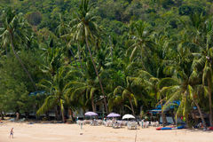 Tall palm trees on the beach in Koh Samui Stock Photography