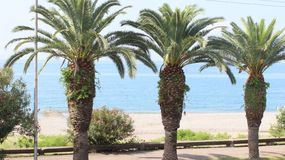 Tall palm trees on the Black sea royalty free stock photography