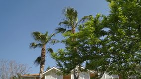 Tall palm trees grow on the background of the yellow building. Panorama from bottom to top. stock video