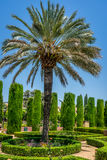 Tall palm trees in The jardines, royal garden of the Alcazar de. The jardines, royal garden of the Alcazar de los Reyes Cristianos, Cordoba, Spain, Europe Royalty Free Stock Photography