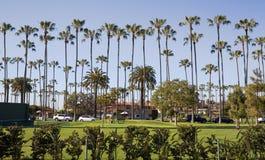 Tall Palm Trees of La Jolla Royalty Free Stock Photos