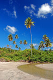 Tall palm trees on La Sagesse beach Stock Photos