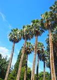 Tall palm trees at the National Garden of Athens Greece stock images
