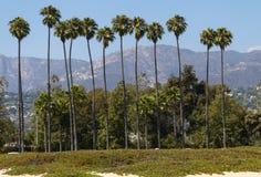 Tall palm trees in Santa Barbara Royalty Free Stock Photography