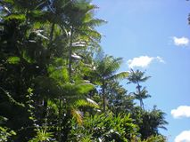 Tall Palm Trees Under a Blue Partly Cloudy Sky Royalty Free Stock Photos