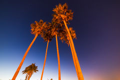 Tall palm trees under a clear sky at night Stock Image