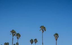 Tall Palm Trees Under the Sky Stock Image
