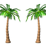 Tall Palm Trees On White Stock Image