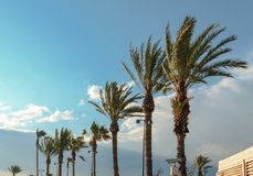 Palm trees bend due the strong wind royalty free stock images