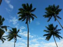Tall palms agains blue sky Royalty Free Stock Photos