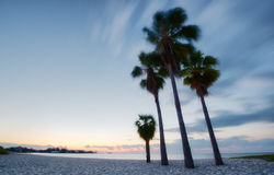 Four palms at the beach Royalty Free Stock Images