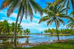 Palmtrees on the coast of Sumatra. Tall palmtrees growing on the beach on the coast of Sumatra Island, Indonesia, Asia Stock Images