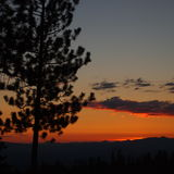 Tall pine sunset Royalty Free Stock Photography