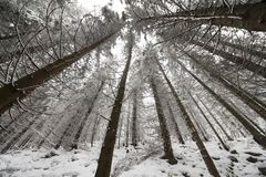 Wide angle view of a forest Royalty Free Stock Photography