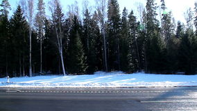 Tall pine trees on the side of the road. With snow covering the area and a car passing by the road stock footage